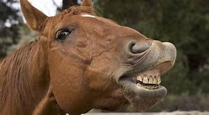 Smile  An In-depth Look Into Your Horse U2019s Mouth