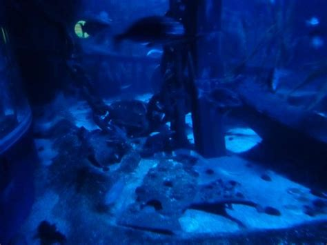 sea aquarium marne la vallee tortue picture of aquarium sea val d europe marne la vallee tripadvisor