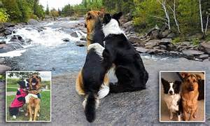 dogs lottie  grizzly   ontario canada  owner