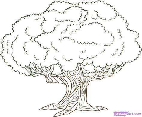 oak tree drawings ideas  pinterest branch