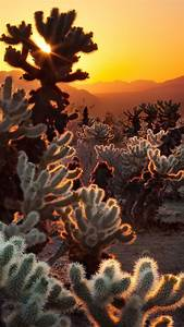 Desert, Cactus, Wallpapers, Hd, Desktop, And, Mobile, Backgrounds