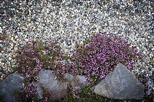 Pflanzen Für Steingarten : pflanzen f r den steingarten haas garten und landschaftsbau ~ Michelbontemps.com Haus und Dekorationen