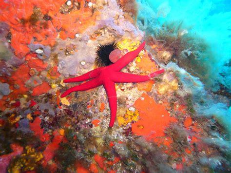 etoile de mer deco etoile de mer big