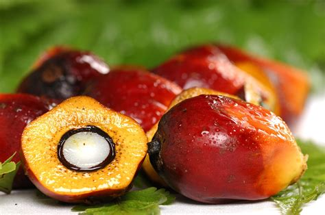 """Should We Buy Products With """"sustainable"""" Palm Oil"""