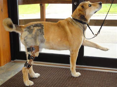 view bracing options  knee injuries  dogs  pets
