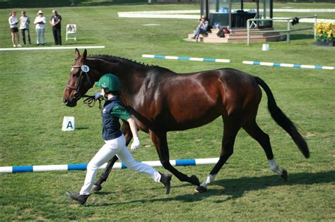 young breeders horse breeding ireland sport competitions