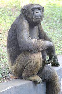 arignar anna zoological park wikipedia