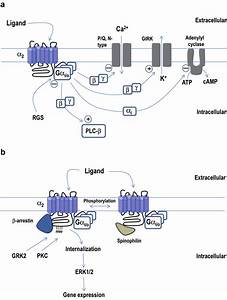 Signal Transduction Of G Protein Coupled Receptors