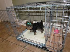 Best 25 potty training puppy apartment ideas on pinterest for Dog potty training problems