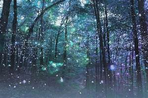 enchanted forest - Google Search   Winter Night Garden ...