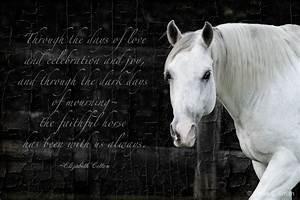 Beautiful Horse Quotes. QuotesGram