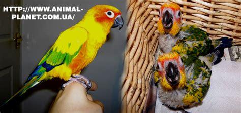 prodazha novosti  novinki animal planet