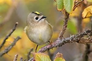 Kleine Vögel Im Garten : so berleben v gel im winter nabu ~ Lizthompson.info Haus und Dekorationen