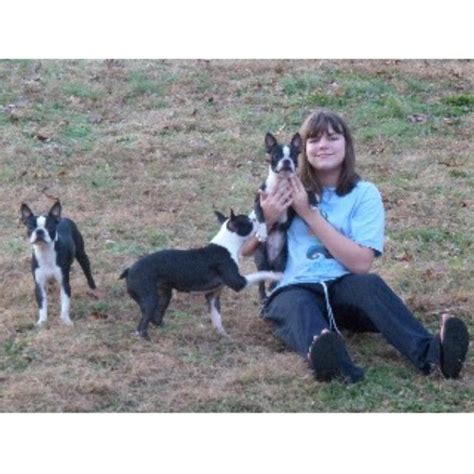 Bestbostonterrierpuppies Boston Terrier Breeder In
