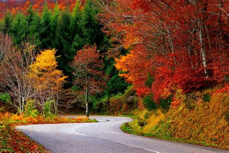 Colourful Autumn Background by Path Forest Autumn Fall Road Leaves Trees Colorful Nature