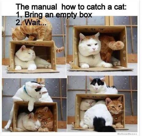 catch  cat meme chris  story reading apes blog