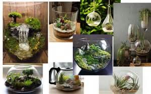 Terrarium,สวนในขวดแก้ว