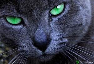 Black cat with emerald green eyes. / for the love of cats ...
