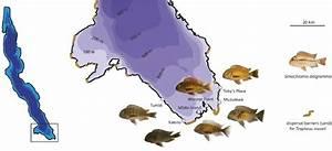 Sampling Sites For Tropheus Moorii And Simochromis