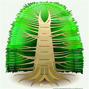 Phylogenetic Tree of Life and other information on plants ...