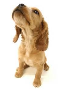 Pet Safety: Poisons - Pet Resorts Dog DaycarePet Resorts