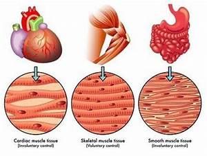 Pin By Tasha Sadija On Anatomy