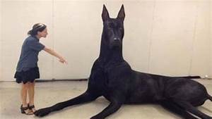 The World Most Biggest Dog Pictures to Pin on Pinterest ...