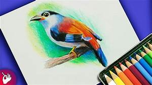 How To Draw Bird With Colour Pencil Step By Step