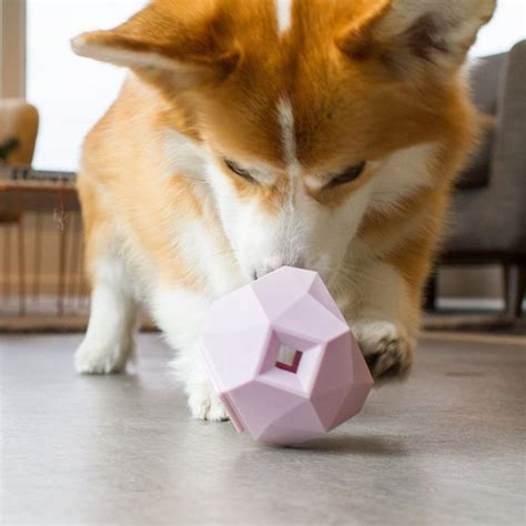 smart dog toy ippinka