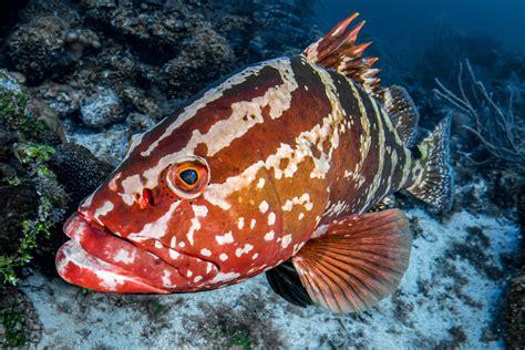 bahamas nassau grouper reef coral fishing sandals definitive guide