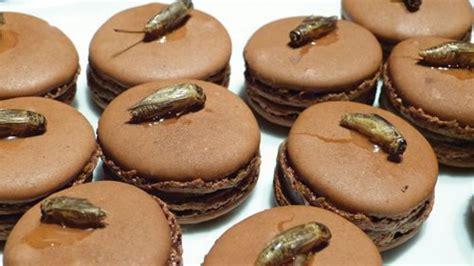 insecte de cuisine des insectes dans votre assiette dès le mois de mai