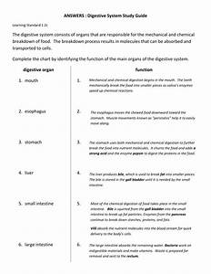 Answers   Digestive System Study Guide