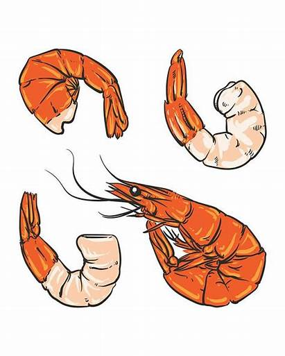 Shrimp Drawing Seafood Clipart Cocktail Hand Prawn