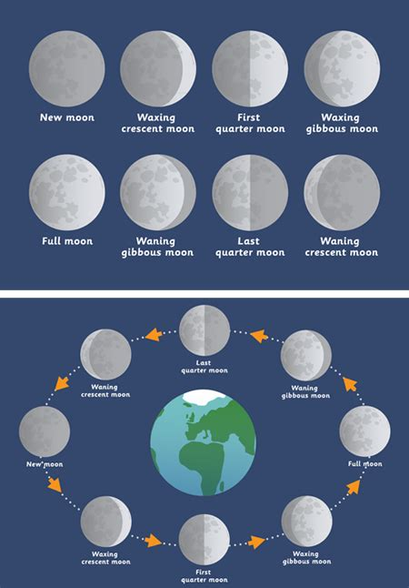 early learning resources phases   moon posters