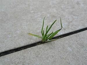 Unkraut In Fugen : fugen im laminatboden beseitigen video unkraut in fugen bek mpfen so geht 39 s schwundrisse ~ Orissabook.com Haus und Dekorationen