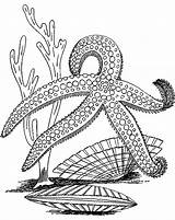 Starfish Coloring Sea Fish Outline Drawing Adult Printable Colouring Animal Colors Getdrawings Getcolorings Recommended sketch template