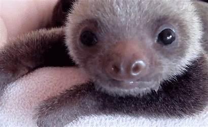 Sloth Gifs Sloths Animal Writing Happy Animated