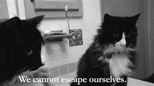 Sad Henri GIF by Internet Cat Video Festival - Find ...
