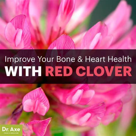 red clover benefits  menopause bone heart health
