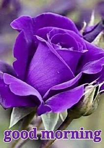 Best 25+ Good Morning Flowers ideas on Pinterest ...