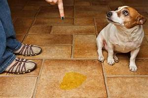 """What Does It Mean When Your Dog Gives You the """"Guilty Look?"""""""