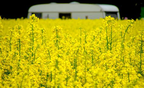 canola smoke point health check cooking oils to eat and avoid