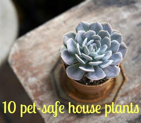 succulent plants poisonous cats keeping your pets safe 10 non toxic house plants aspca apartment therapy