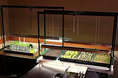best grow lights for seedlings mavis garden blog grow light set up and pictures of