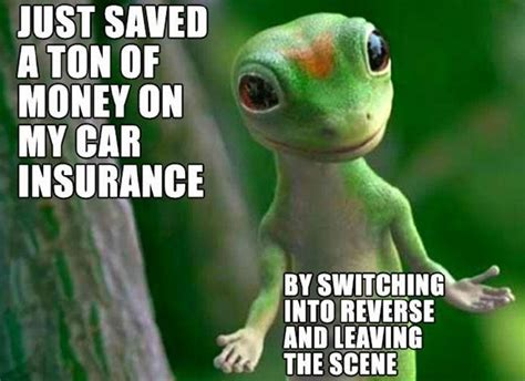 Car Insurance Problems Solved! Funny Gecko Meme