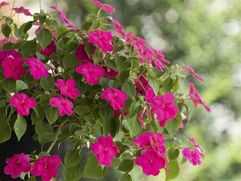 annual flowering bushes the easiest annuals to plant for color all summer long diy