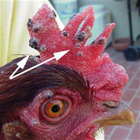 fowlpox birdpox epithelioma contagiosum fowl diphtheria