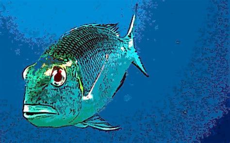 Illustration Fisch Meer Kostenlose Bilder Downloaden