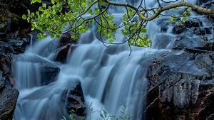Download Wallpaper 1920x1080 Twigs, leaves, waterfalls ...