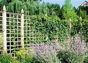 Immergrüne Kletterpflanze Für Zaun : bild eine rankwand aus holz l sst sich gut mit ~ Michelbontemps.com Haus und Dekorationen